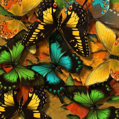 Мир тропических насекомых